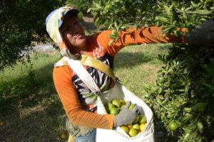 03-citricaldas-cultivos