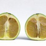 07-hlb-sintomas-en-frutas-hilda-gomez-usda